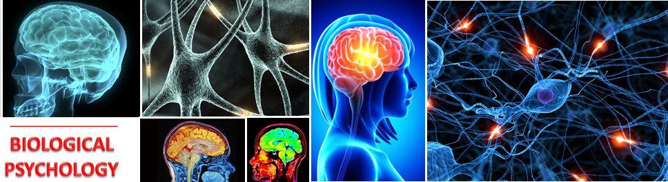 ib psychology coursework mark scheme